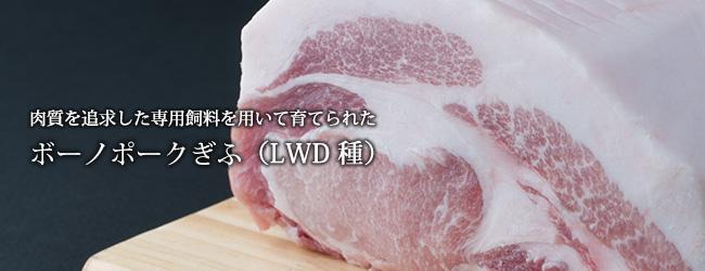 ボーノポークぎふ(LWD種)